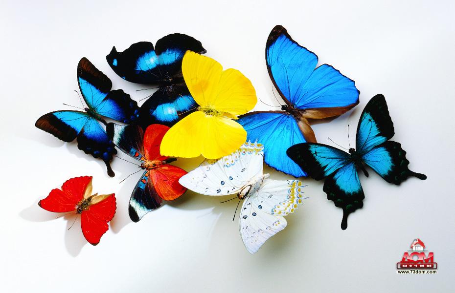 натяжные потолки с фотопечатью Бабочки