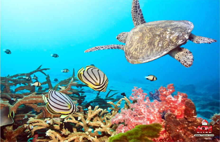 натяжные потолки с фотопечатью каталог фото - Подводный мир