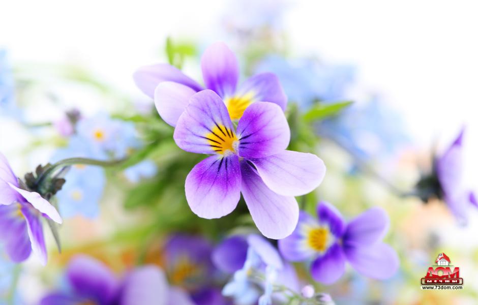 потолки с фотопечатью каталог - Цветы